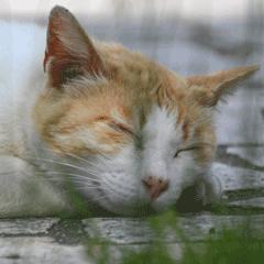猫(ネコ)の写真スタンプ