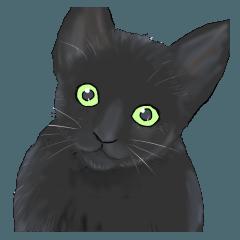 ある黒猫のスタンプ