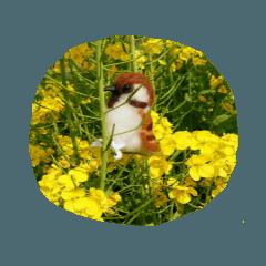 [LINEスタンプ] 羊毛フェルトのトリちゃんシリーズ 1