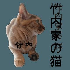 竹内家の猫