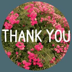 花と共に「ありがとう」を伝えるスタンプ