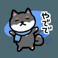 大阪弁の黒柴さん