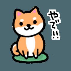 大阪弁の柴犬さん