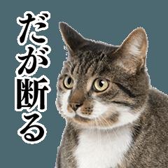 猫写真スタンプ1
