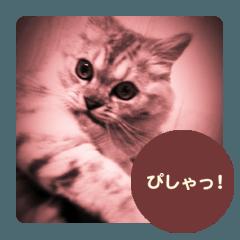 かわいい猫写真 2