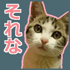 [LINEスタンプ] うちのお嬢♡の画像(メイン)