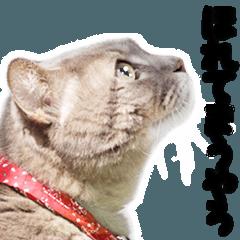 関西弁リアル猫(写真)