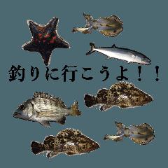 リアル釣りスタンプコレクション
