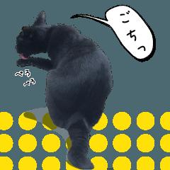 猫ねこリアル