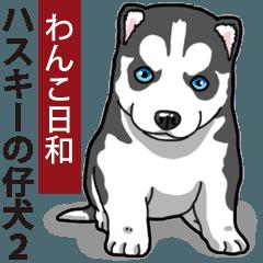 わんこ日和 シベリアンハスキーの仔犬2