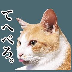 猫の写真で作ったスタンプ 2