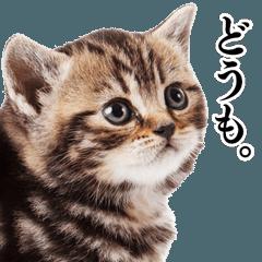 猫写真スタンプ2