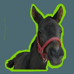 お馬の親子(実写版)