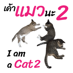 ニャーニャー 私は猫です 2