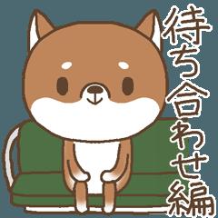 柴犬のシバさん