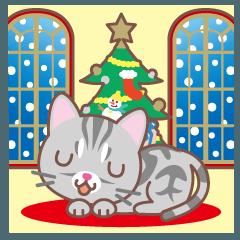 クリスマスと年末 〜アメショー