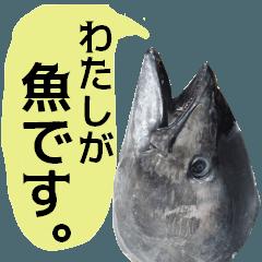 わたしが魚です。