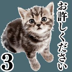 猫写真スタンプ3