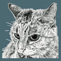 vol.04 話す猫と動物たち 猫・犬・鳥・クマ