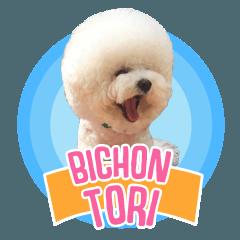Bichon Tori