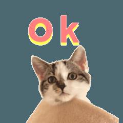 実写♡猫♡らむちゃん