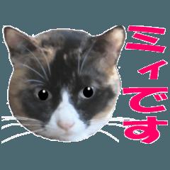 三毛猫の写真スタンプ2