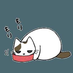 ネコさま2