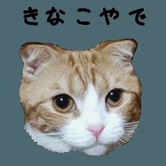 我が家のきなこ~関西弁編~