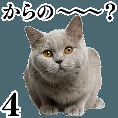 猫写真スタンプ4