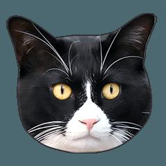 明るい黒白猫♪