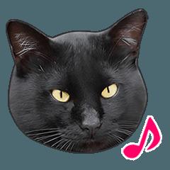 明るい黒猫♪