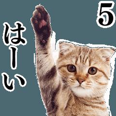 猫写真スタンプ5