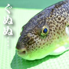 魚写真スタンプ1