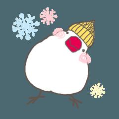 関西弁の白文鳥 冬(お正月・クリスマス)