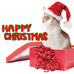 【ねこクリスマス】