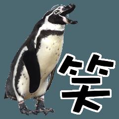 ペンギンの時間
