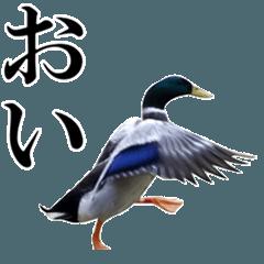 鳥さんがいっぱい【実写版】