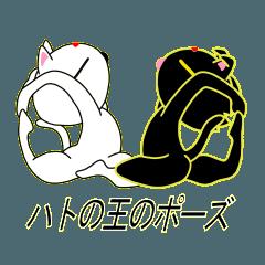 ヨガねこ(シロとクロ)