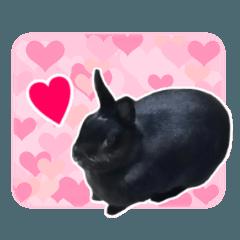 [LINEスタンプ] 実写★黒ウサギとライオンラビット
