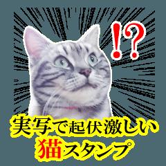 [LINEスタンプ] 実写★感情の起伏激しめ猫~冬用あります~