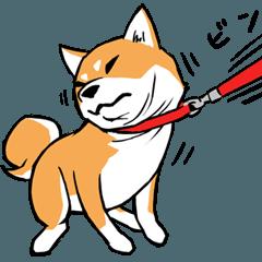 柴犬のキモチ 赤黒