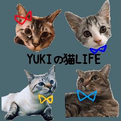 YUKIの猫LIFE