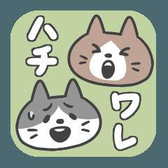 ハチワレタン【お詫びのキモチ24】