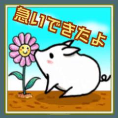 第2弾コブタのシロちゃん【お急ぎ+α】