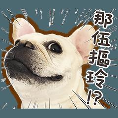 フレンチブルドッグモチちゃん(レアル)