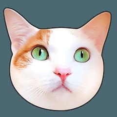 かわいい猫顔&肉球♪