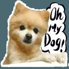 犬トーク!!犬写真 吹出し 英語&日本語