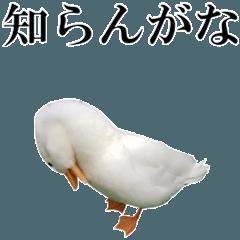鳥さんがいっぱい 2【実写版】