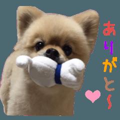 リアルDOG Wan de FULL2 ワンがいっぱい☆