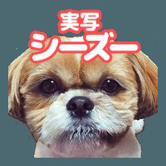 [LINEスタンプ] 【実写】シーズー犬ぽんずとかぼす (1)